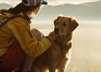 Dog Friendly Cottages Lake District Tips for Taking Your Dog on a Lake District Cottage Holiday Blog Image