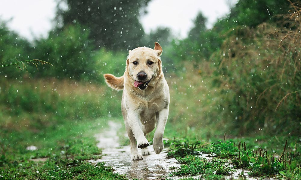Dog Friendly Cottages Lake District Why Dogs Love the Lake District Blog Image