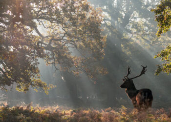 Lake District Breaks Wildlife You Can Spot in the Lake District Blog Image